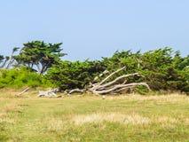 Landskap av den Jersey ön arkivfoto