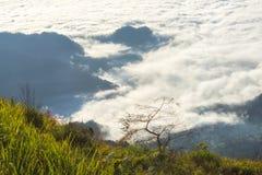 Landskap av den ljusa morgonsolen med dimma på Phu cheefa i Chiang Rai, Thailand Arkivfoto