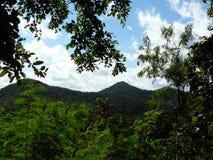 Landskap av den naturliga gröna skogen och blå himmel Arkivfoto