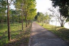 Landskap av den raka vägen under trädvägträdet Arkivbilder