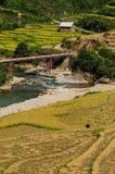 Landskap av den terrasserade risfältet i Vietnam Royaltyfria Bilder