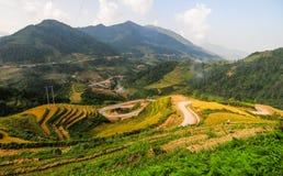 Landskap av den terrasserade risfältet i Vietnam Royaltyfri Fotografi