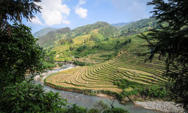 Landskap av den terrasserade risfältet i Vietnam Arkivbild