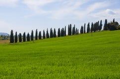 Landskap av den Val D `en Orcia Arkivfoton