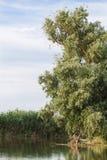 Landskap av den Volga deltan Fotografering för Bildbyråer