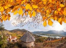 Landskap av den Wachau dalen, Spitzby med Danube River i Österrike Arkivbilder