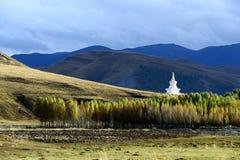 Landskap av det Daocheng länet Royaltyfria Foton