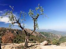 Landskap av det Gennargentu berget Arkivbild