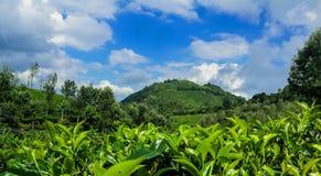 Landskap av det grönaktiga berget under blå himmel royaltyfri fotografi