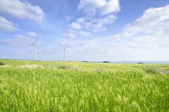 Landskap av det gröna kornfältet och vindgeneratoen Royaltyfria Foton
