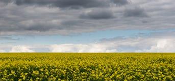 Landskap av det gula fältet och stormig himmel Royaltyfri Bild