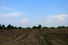 Landskap av det torkade fältet med blå himmel i sommar Tid Arkivbild
