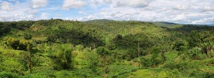 Landskap av ecuadoriandjungeln Arkivfoton