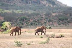 Landskap av elefanter i det löst royaltyfria foton