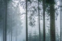 Landskap av en dimmig och dyster skog fotografering för bildbyråer
