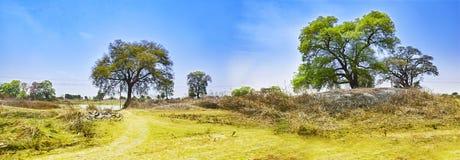 Landskap av en flodbank Damodar india Asansol treeson förbudet Royaltyfri Fotografi