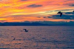 Landskap av en havssolnedgång och seagulls Royaltyfri Fotografi