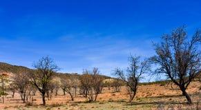landskap av en jordbruks- lantgårdexploatering av fruktträd på ett fält Träden överges och nästan torrt med många royaltyfria bilder