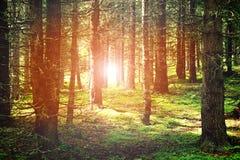 Landskap av en skog Arkivfoto