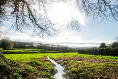 Landskap av ett grönt fält med bakgrund av träd, med en flod i - mellan royaltyfria foton
