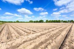 Landskap av ett kultiverat bondefält på en solig dag arkivbild