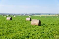 Landskap av fältet med baler av hö Arkivbild