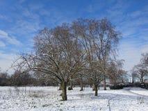 Landskap av Forest Trees i vinter Royaltyfria Bilder