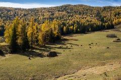 Landskap av grässlätten av Xinjiang, Kina Arkivfoton