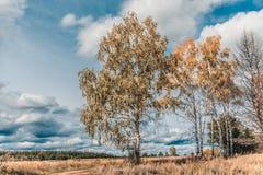 Landskap av höstbirchsna nära vägen Fotografering för Bildbyråer