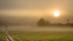 Landskap av havrelantbrukfältet och soluppgång i misten Royaltyfri Fotografi