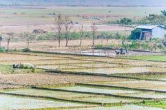 Landskap av indiska risfält med arbetare royaltyfri bild