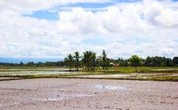 Landskap av irländarefältet Arkivfoton