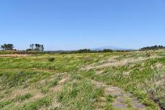 Landskap av Jeju med det Halla berget, arkivbild
