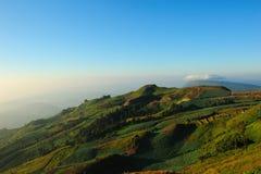 Landskap av kålfältet Royaltyfri Foto