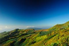 Landskap av kålfältet Arkivbilder