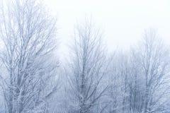 Landskap av kala träd i dimman Royaltyfri Fotografi