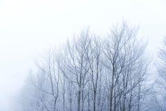 Landskap av kala träd i dimman Royaltyfri Foto