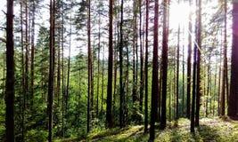 Landskap av Karelia Royaltyfria Bilder