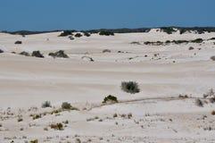 Landskap av Lancelin Sand Dunes: Västra Australien Royaltyfri Fotografi