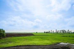 Landskap av ljust - grön lantgård med solljus i blå himmel Arkivfoto