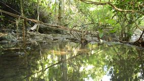 Landskap av lugnt vatten på floden i skog lager videofilmer