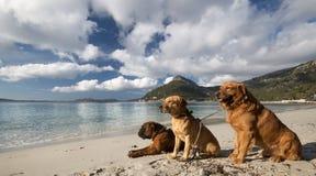Landskap av Mallorca Royaltyfri Bild