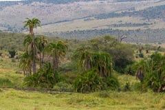 Landskap av masaien Mara kenya Royaltyfria Bilder
