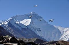 Landskap av monteringen Everst med fåglar som flyger i skyen Fotografering för Bildbyråer