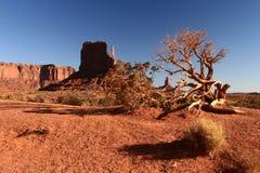 Landskap av monumentdalen Arkivfoton
