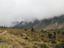Landskap av Mount Kenya, Kenya Arkivfoton