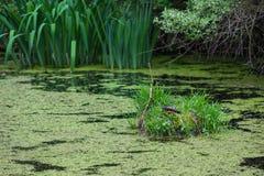 Landskap av Nixon Park i Loganville, Pennsylvania Arkivfoton