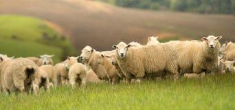 Landskap av Nya Zeeland fotografering för bildbyråer
