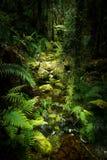 Landskap av Nya Zeeland arkivbild