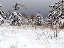 Landskap av pinjeskogar Arkivfoton